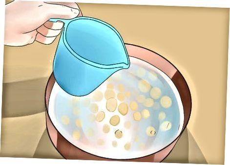 Kukurūzų daiginimas ir misos paruošimas