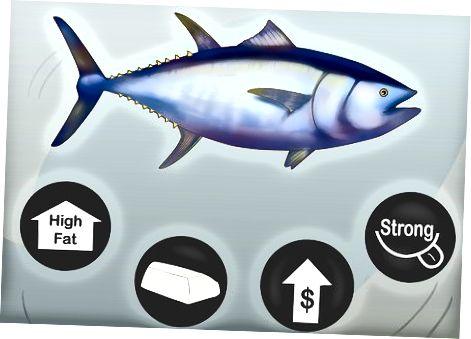 Izbira najboljšega tuninega zrezka