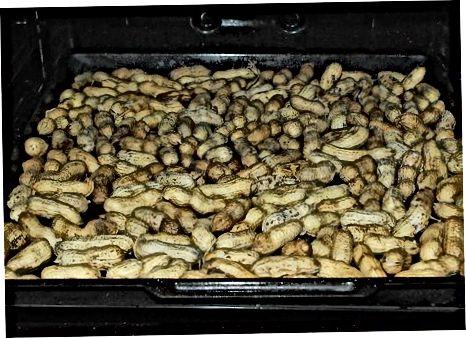 Marrja e gjalpit të Kikirikut nga Kikirikët e Shelled
