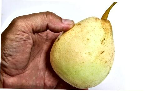 Zgjedhja dhe ruajtja e dardhëve aziatike