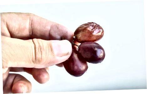 Zgjedhja e rrushit të freskët
