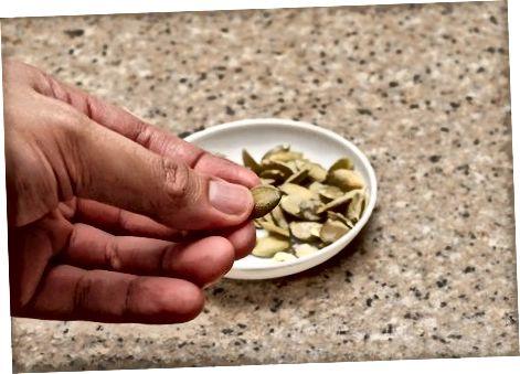 Comendo as sementes