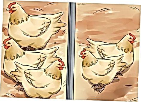 Trajtimi i vezëve të oborrit të shtëpisë ose tregut të fermerëve