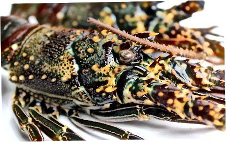 Varenie vášho homára