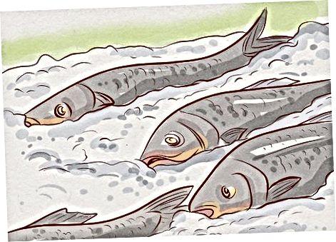 Að velja sushi-gráðu fisk og sushi