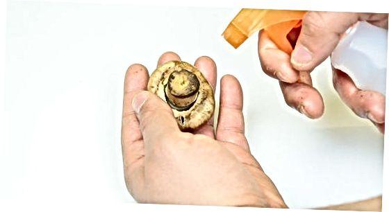 با خیال راحت از قارچ استفاده کنید