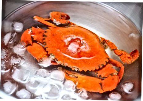 Sjóðandi krabbi