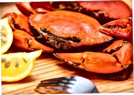 Rykandi krabbi