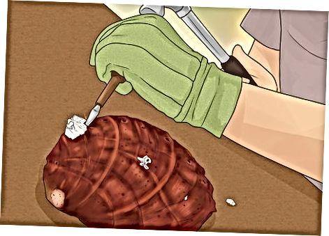 Abalone kestade puhastamine ja sära