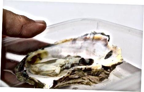 Ruajtja e detit gjysmë të guaskës në frigorifer