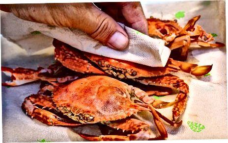 جوشاندن خرچنگ های آبی