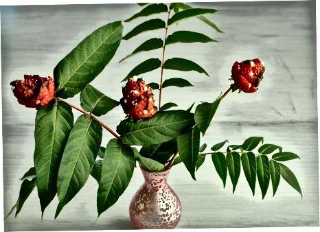 Прикрашаючи ваші квіти полуниці