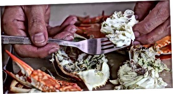 Ushqimi i Gaforres
