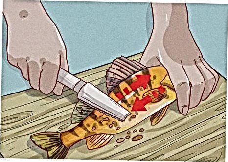 Ruajtja dhe Pastrimi i chetës tuaj