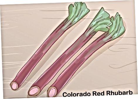Rhubarb o'simliklarini sotib olish