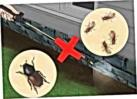 Përgatitja e enëve të insekteve gustator