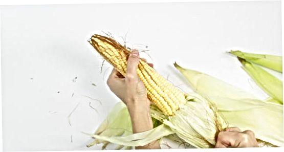 Кухање кукуруза у лонцу
