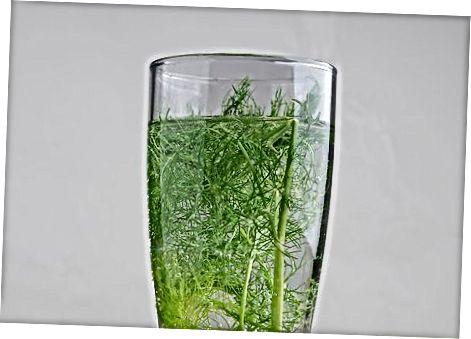 Geymir fennel í ísskápnum