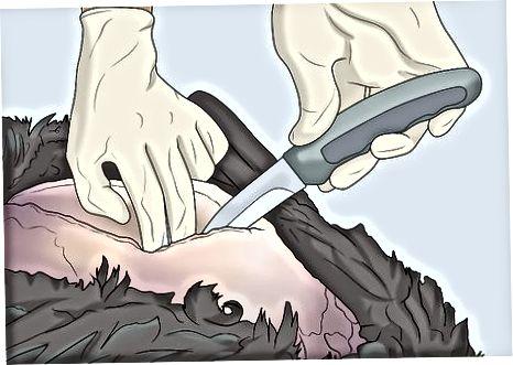 Die Brust filetieren