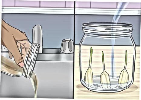 Vendosja e hudhrës në ujë
