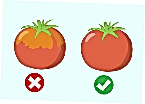 Výber čerstvých, zrelých paradajok