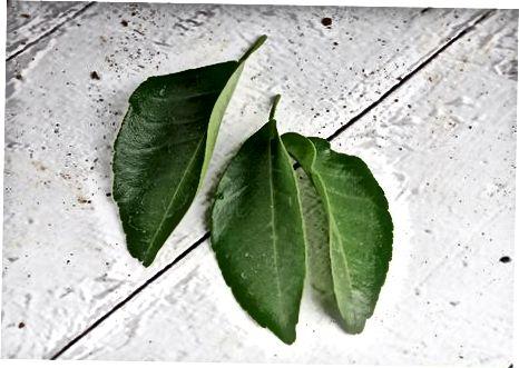 Batendo no Cocoyam e rasgando as folhas de Oha