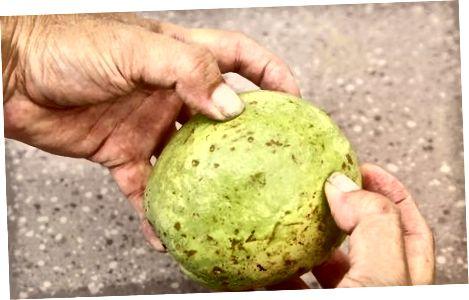 Þroskaðir guava í kæli