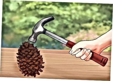 Гранатирање орашастих ораха
