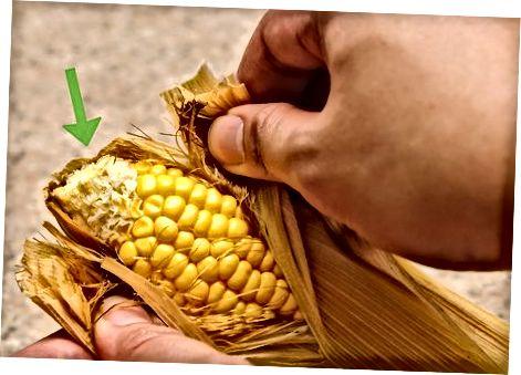 Чување свјежег кукуруза на коцки