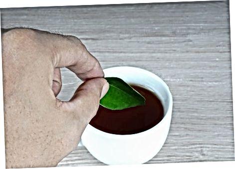 Erva de bergamota e chá preto