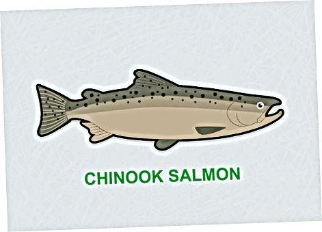 Izberite svež losos po sorti