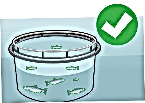 Gojeni ali divji losos