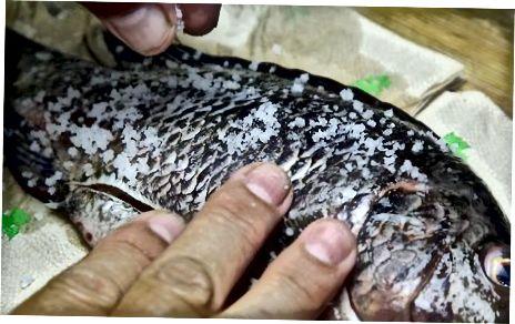 Bereiten Sie Ihren Fisch für den Grill vor