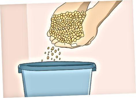 Kukurūzų kramtymas