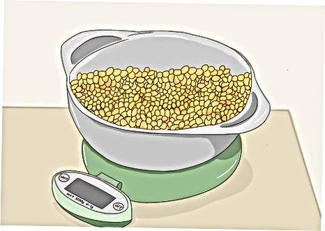Kukurūzų džiovinimas ir rauginimas