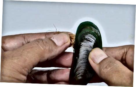 Muscheln zubereiten