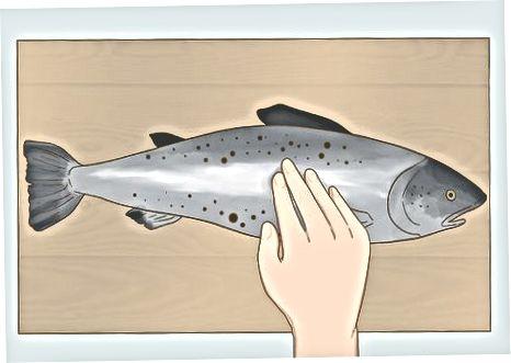 Kokybiškos visos žuvies pasirinkimas