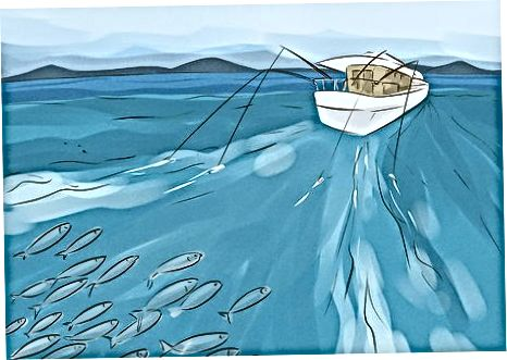 پیدا کردن و نزدیک شدن ماهی خال مخالی اسپانیایی