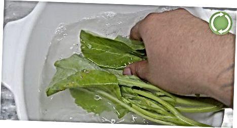 Izpiranje in uporaba zelenice ovratnice