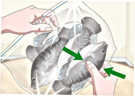 Fisch mit kaltem Wasser auftauen