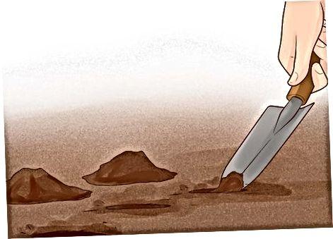 Annar hluti: Árleg sumarskerun