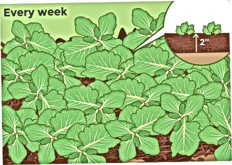 Kujdesi për bimët në rritje