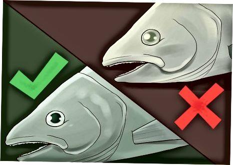 Kontrolli i Salmonit të Raw