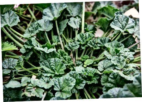 Уштеда новца на сушеним биљкама