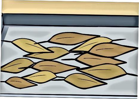 Secagem de folhas de louro com um desidratador