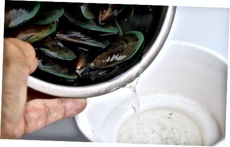 Чување живих шкољки у вашем фрижидеру
