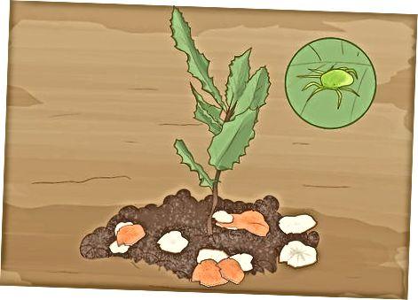 Rritja dhe mirëmbajtja e pemës tuaj