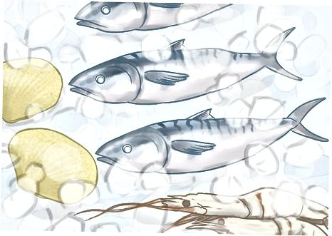 خرید ماهی سالم و صدف