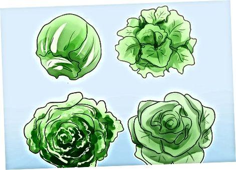 Вибір поживних інгредієнтів салату