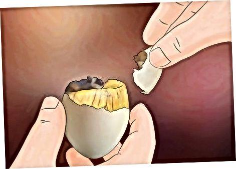 Ushqimi i Balut